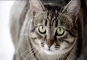 Корм для кошек -Мяу